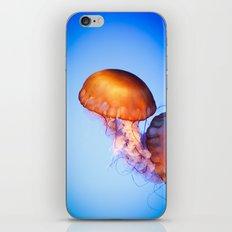 Large Jellyfish iPhone & iPod Skin