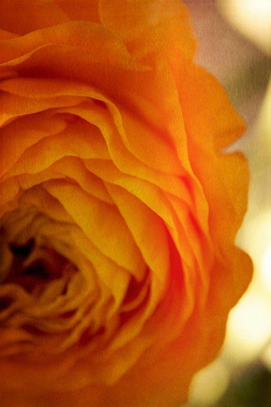 Orange Edges Canvas Print