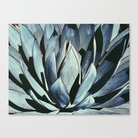 Agave Dream Canvas Print