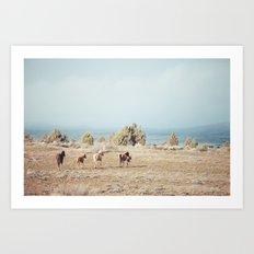 Oregon Wilderness Horses Art Print
