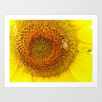 Bee On A Sunflower Art Print
