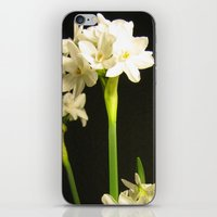 Paperwhites iPhone & iPod Skin