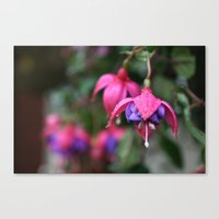 Just Hangin' Canvas Print
