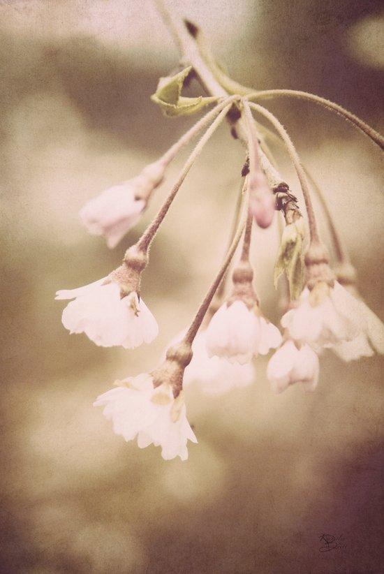 Delicate Spring Art Print
