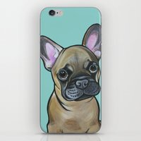 Armand the Frenchie Pup iPhone & iPod Skin