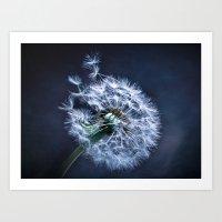 Dandelion Blues Art Print