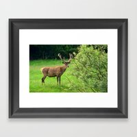 Stag 2/3 Framed Art Print