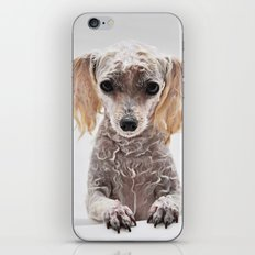 Bath Time for Rylie  (poodle) iPhone & iPod Skin