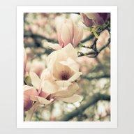 Magnolia Tree Bloom.  Fl… Art Print