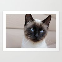 Are you looking at me? Art Print
