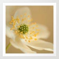Blossom In Creme Art Print