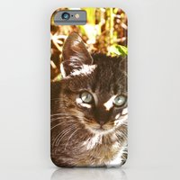 Cat In The Shadows iPhone 6 Slim Case