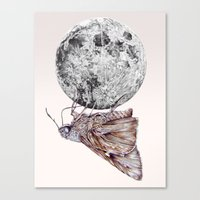 In Which A Moth Is Entic… Canvas Print
