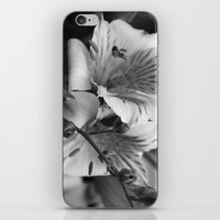 Freesia B&W iPhone & iPod Skin