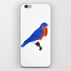 Pretty bird iPhone & iPod Skin