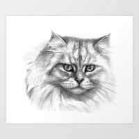 Expressive glance cat G132 Art Print