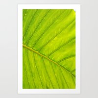 Tropical Leaf Vein Abstr… Art Print