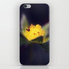Strawberry Blooms in December iPhone & iPod Skin