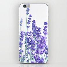 Fresh Lavender #1 #decor #art #society6 iPhone & iPod Skin