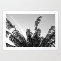 DC Palms Art Print