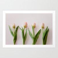 Four Tulips Art Print