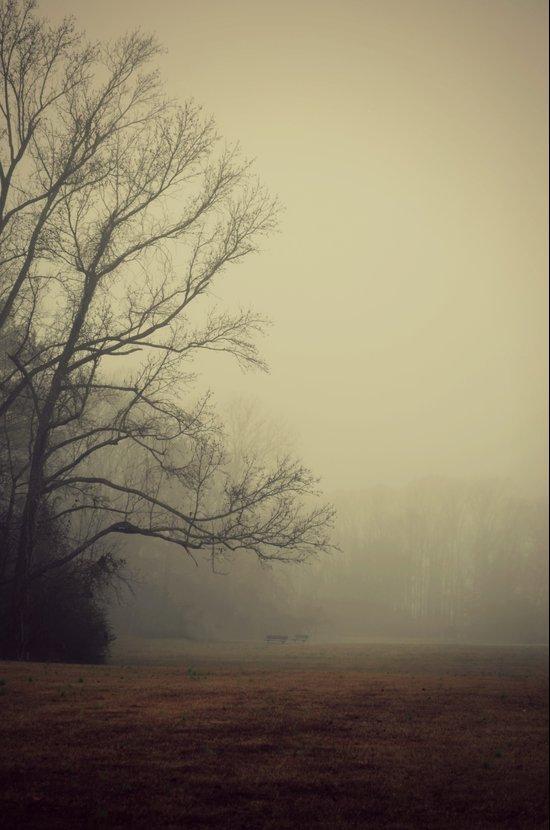 A Gathering of Fog Art Print