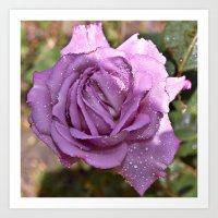 A Rose is a Rose Art Print