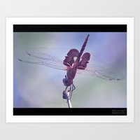 Pink Dragonfly Art Print