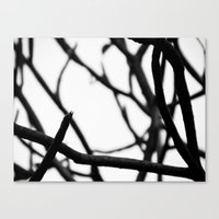 Branch Canvas Print