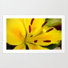 Lillies of the Past Art Print