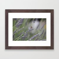 Lavender Butterflies - JUSTART © Framed Art Print