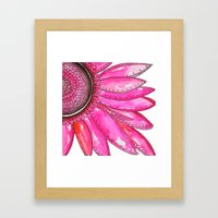 Gerber Daisy Watercolor Print Framed Art Print