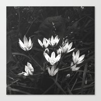 Star of Bethlehem  Canvas Print