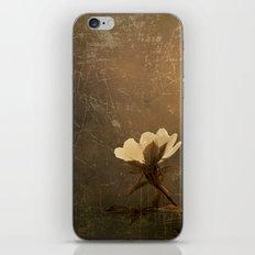 Wild Old Rose iPhone & iPod Skin