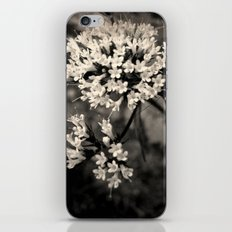 Valeriana sitchensis iPhone & iPod Skin