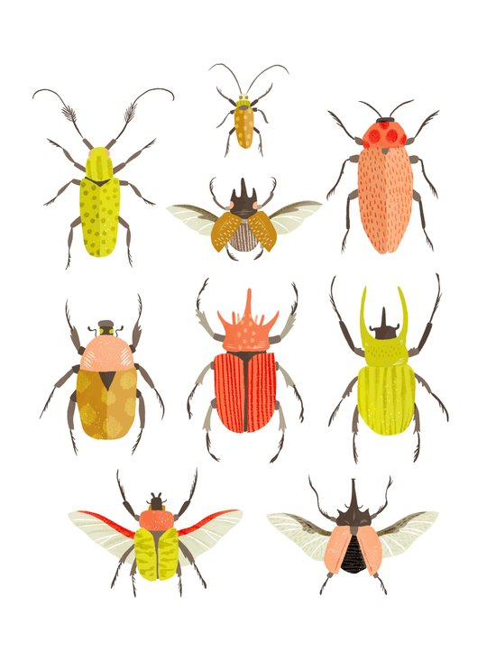Beetle Identification Chart Art Print