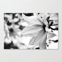 Inflorescence  Canvas Print