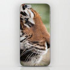 Tiger Portrait iPhone & iPod Skin
