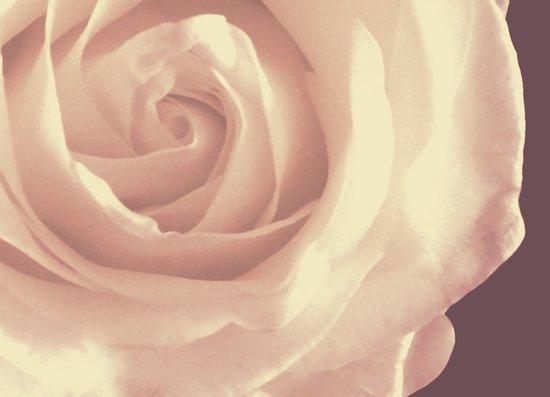 Roses are White Art Print