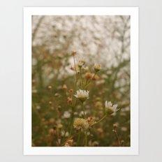 Where We Bloom Art Print