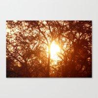 Canopy Sunrise Canvas Print