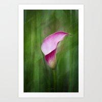 Calla Lily Flow Art Print