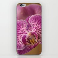 Pink Orchid Flowers iPhone & iPod Skin