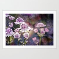 Textured Astrantia Art Print
