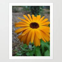 Orange Flower Side Art Print