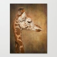 Beautiful Baby Canvas Print