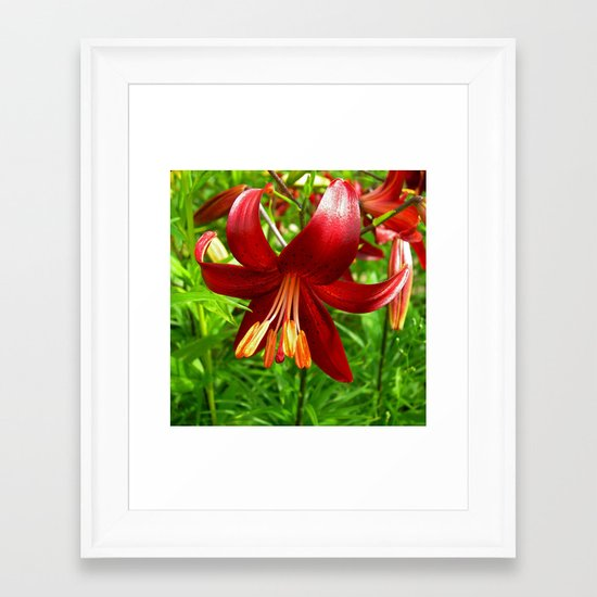 red lily Framed Art Print