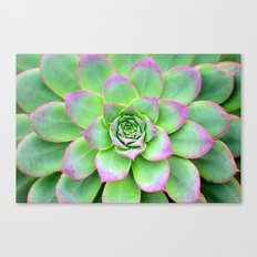 The Longest Bloom Canvas Print