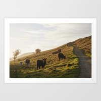Cattle grazing on mountainside. Derbyshire, UK. Art Print