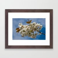 White Cherry Blossom Framed Art Print